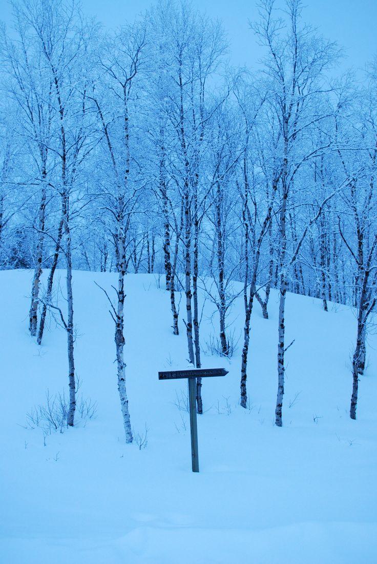 Panneau perdu au milieu de la forêt... Les sentiers ne sont pas les mêmes selon la saison!