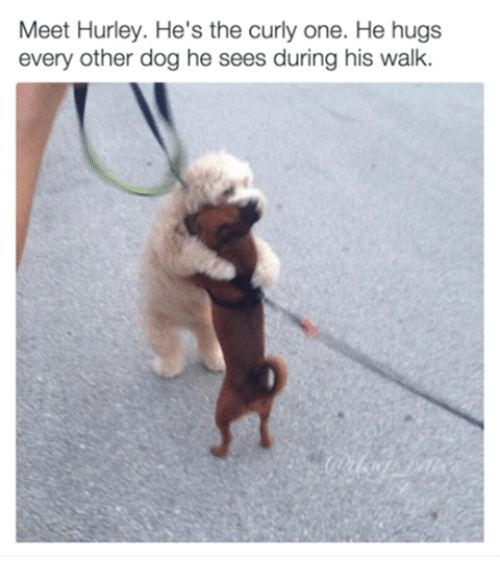 it's a doggy doggo world - Imgur