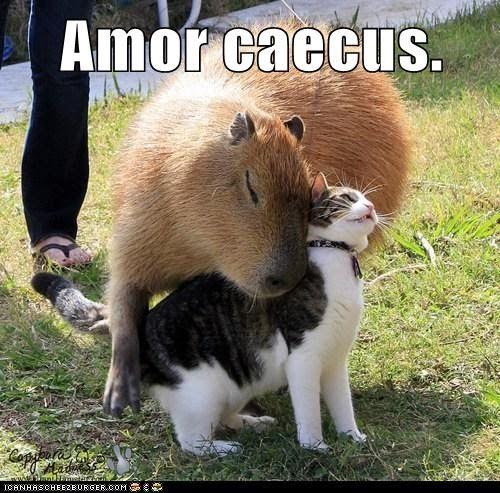 Amor caecus.    Love is blind.