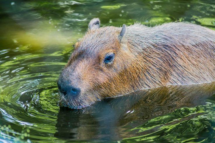 River Animal