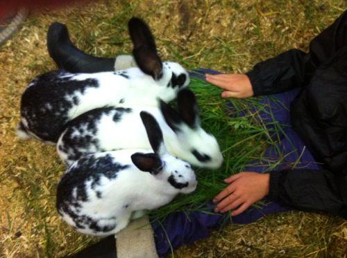 Hauger Gård - barnebursdag og utdrinkningslag med rodeo ++