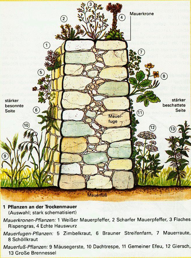 trockenmauer aus kalkstein - Google-Suche Garten Pinterest - grose wohnzimmer pflanzen