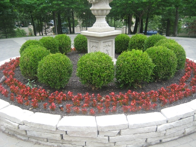 Begonias and boxwoods landscaping pinterest boxwood for Green plants for flower beds