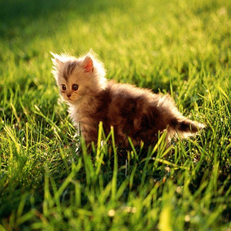 Søt og snill kattunge