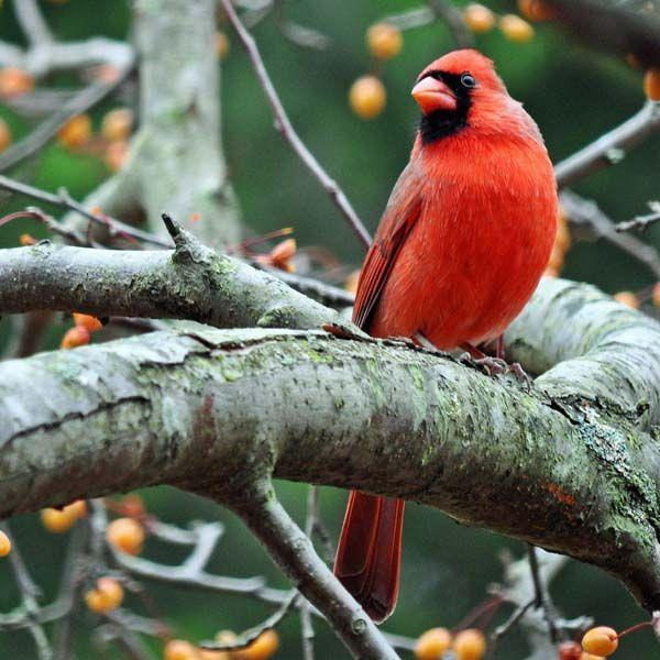 100 Beautiful Bird Pictures | Pixel Curse