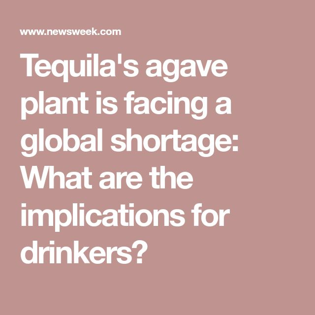 Tequila's agave plant is facing a global shortage: What are the implications for drinkers?