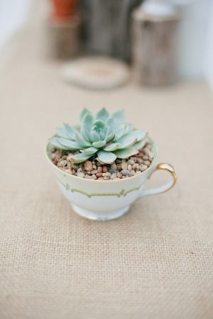 Cute low maintenance cacti in a teacup