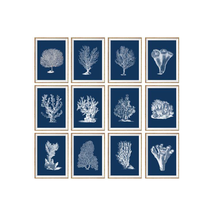 Navy Sea Coral Art Print SET OF 12. UNFRAMED. navy sea coral, navy art prints, navy beach art, navy home decor, navy wall art, botanical by AntiqueWallDecor on Etsy https://www.etsy.com/listing/205973016/navy-sea-coral-art-print-set-of-12