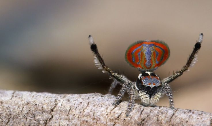 If you don't think of spiders as cute and cuddly, then you've never met Sparklemuffin, Skeletorus, and the elephant spider.