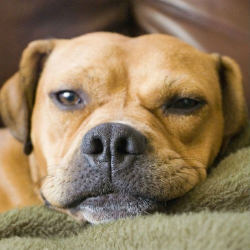 7 Signs Your Dog Is In Pain And Trying To Hide It