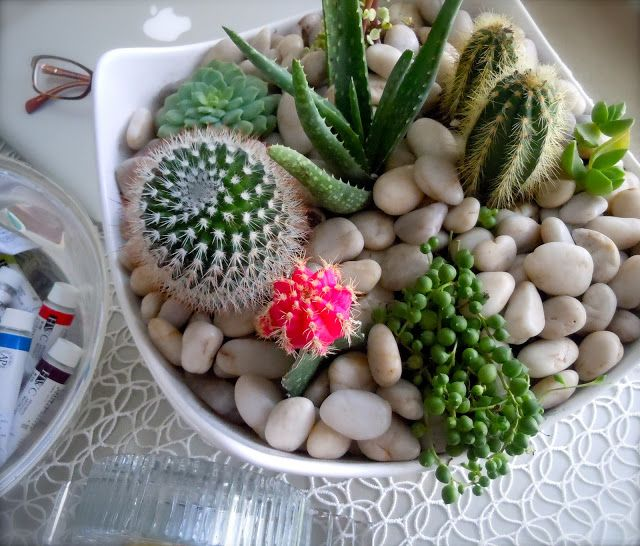 Garden Design With The Koenigs Create: Beautiful Indoor Cactus Gardens  Kaktusi With How To Design