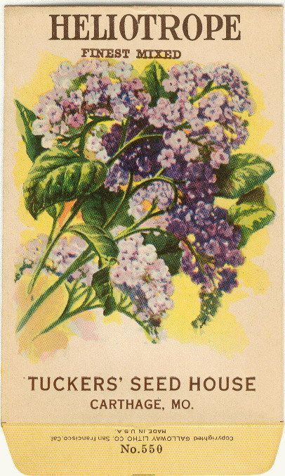 Vintage Flower Seed Packet Tuckers Seed House Lithograph HELIOTROPE Carthage, Missouri. $6.00, via Etsy.