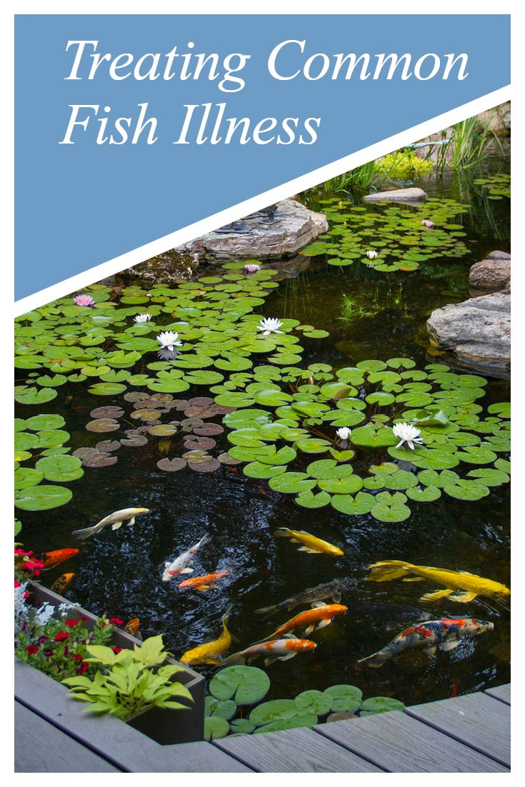 17 best images about pond maintenance tips on pinterest for Koi pond maintenance service