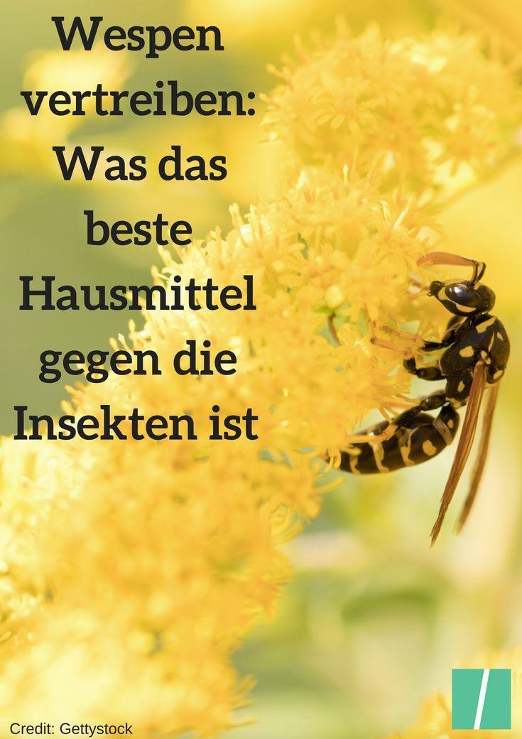 Hausmittel Gegen Wespen So Vertreibt Ihr Die Insekten Am Effektivsten Wespen Vertreiben Wespe Insekten