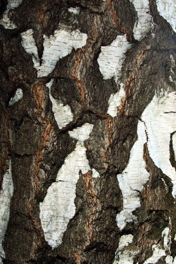 cracked_bark