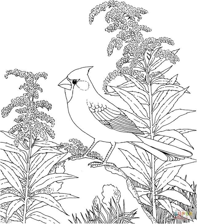 21 Exclusive Picture Of Bird Coloring Pages Entitlementtrap Com Bird Coloring Pages Coloring Pages Winter Flower Coloring Pages