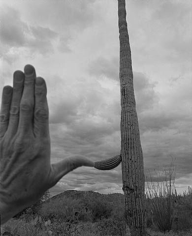 Saguaro National Monument, Tucson, Arizona, 1999