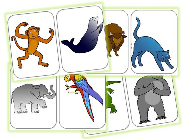 SEQUENCE anglais: animals and body-CYCLE 2 - Caracolus