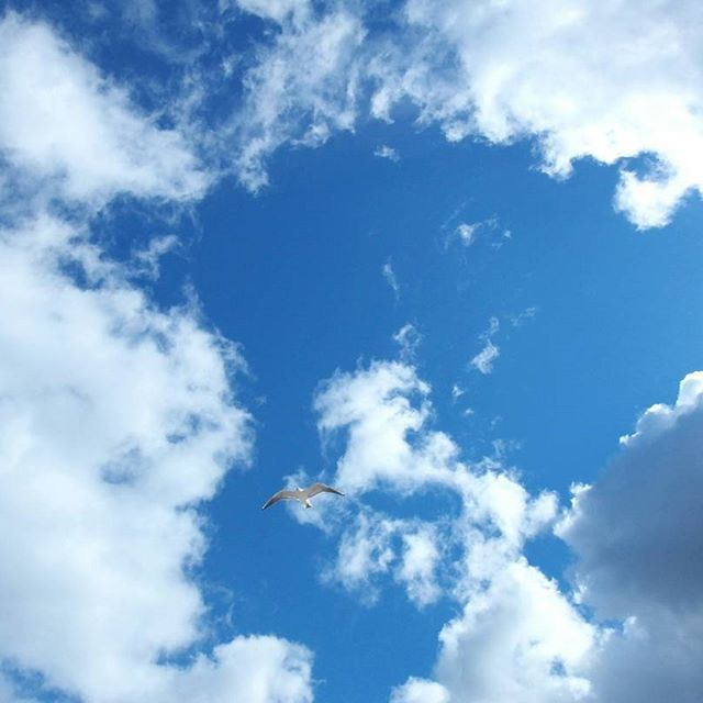#bluesky #blue #sky#white#clouds #bird#mewa#nature#natureporn#lubiepolske #gdansk#poland#spring#explorepoland #instagood#good #sunnyday