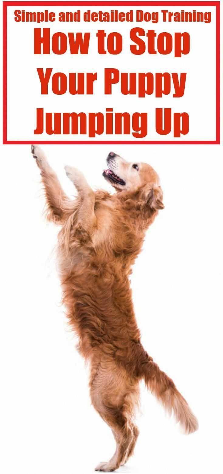 Dog Training Biting Dogtrainingbiting Dog Training Dog Clicker