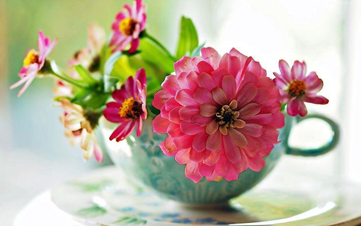 Cynia, Kwiaty, Bukiet, Filiżanka