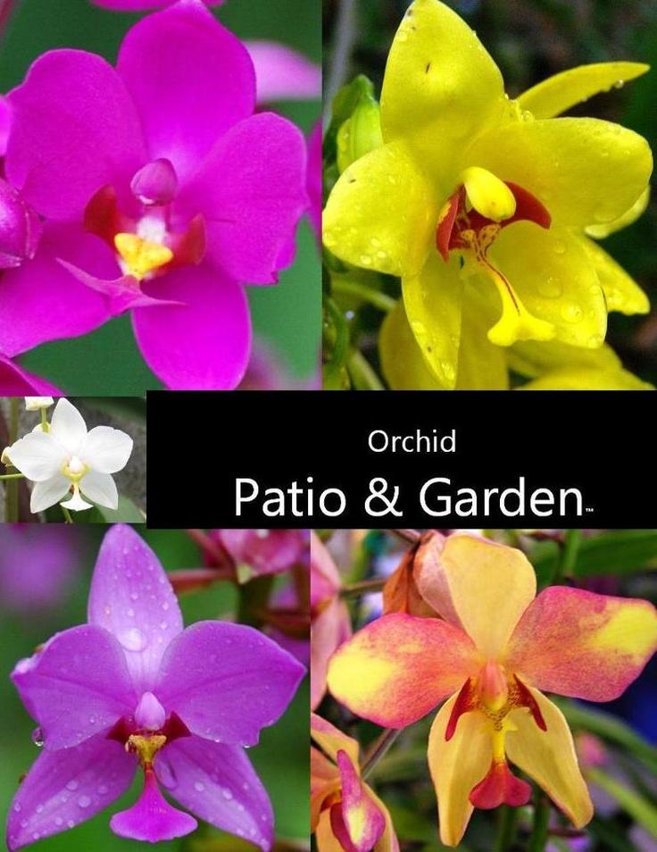 Orchid Patio & Garden