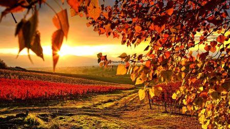 VINEYARD in AUTUMN - seasons, outdoors, maurizio rellini, umbria, vineyard, italy, sunrise, nobody, landscape, warm light, europe, cropland, perugia district, sopa, scenic, western europe, mediterranean area, countryside, morning, autumn, backlit