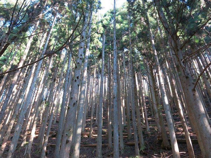 Kyoto-9.jpg (1000×750)