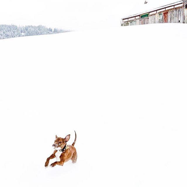 No pienses tanto, deja que la vida te sorprenda. • • • #dog #americanstaffordshire #dogwalk #love #winterfun #hundeliebe #dog #hund #liebe #tierfotografie #snow #pet #doglife #landscape #hundefotografie #winterspaziergang #perros #enjoylife #enjoy #adoroamiperro #instaanimal #lovelydog #sweetdog #hundeglück #hundeportrait #hundefoto #hundeleben #hundeliebhaber #doglove #nature #winterwonderland