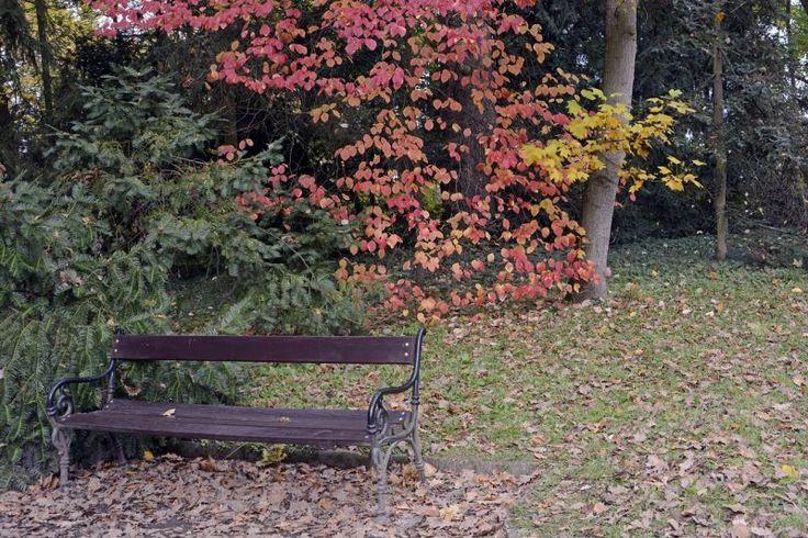 Természet - Vácrátót - Botanikus kert