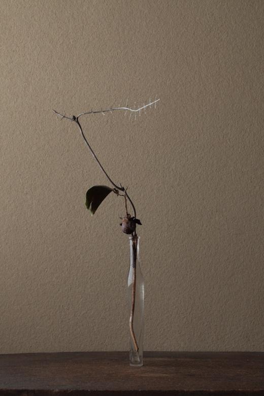 2012年1月28日(土)    「枯れる」を超えて「骨」になった姿。そこに悲惨さはありません。  花=黒柿(クロガキ)、裏白(ウラジロ)  器=古ガラス細瓶(20世紀)