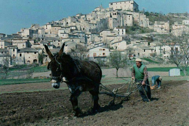 Tempo di apertura dei solchi per rimuovere i bulbi di zafferano.... Sinibaldo. Coltivazione dello Zafferano a Navelli. #Abruzzo #Navelli #Travel #Borghi #Italy #Abruzzosegreto #zafferano #saffron