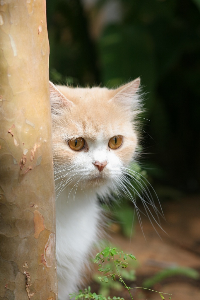 Pin by Milton Leite on Animal & Gardening (With images) Cats