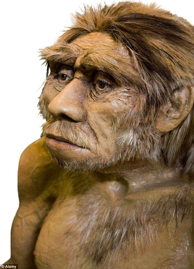 the mystery shrouding the neanderthal man But are the scientists right in applying the theory of evolution to the strange two-legged hominid known as 'man'  the mystery of the human brain.
