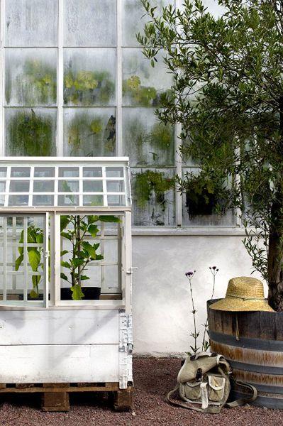 Växthus för pallkragar/eupall...