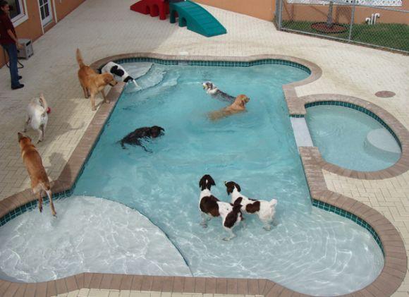 Backyard dog pool.