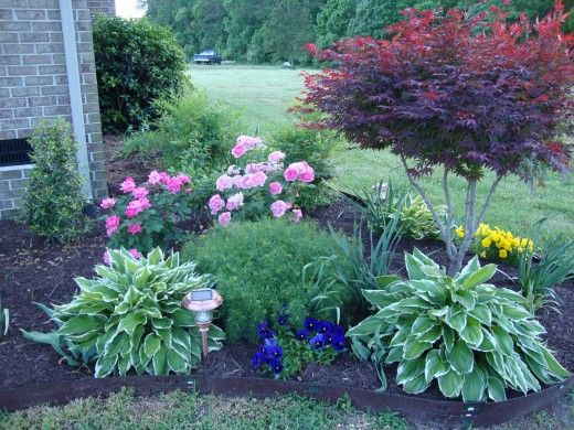 Variegated Hostas provide a wonderful border and a small but full Japanese Maple completes this corner of the bed beautifully.