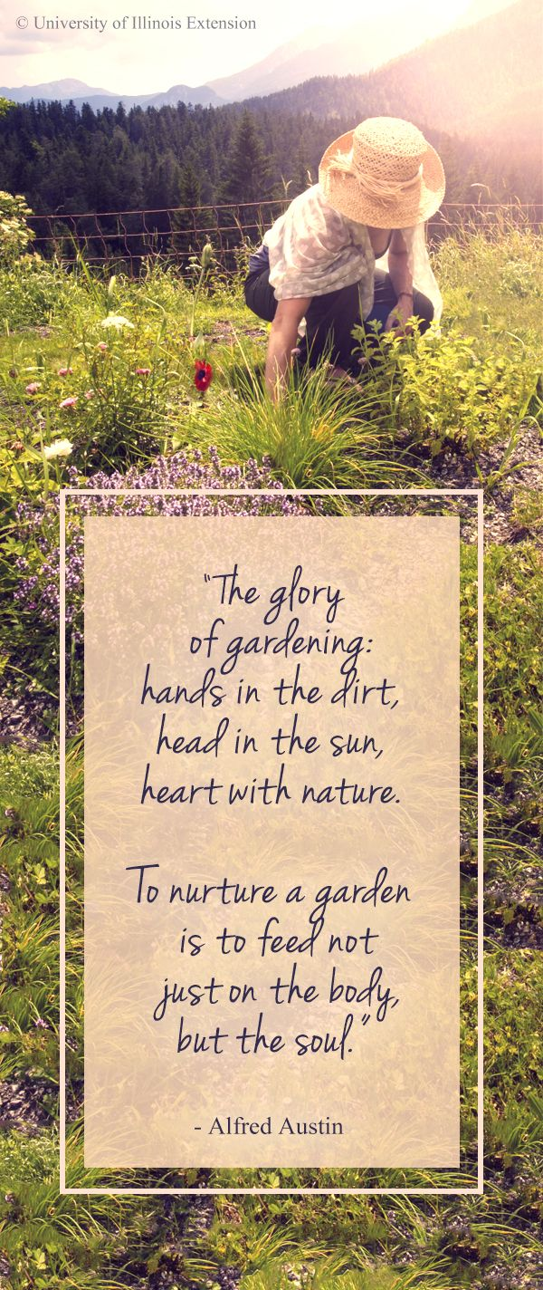"""""""The glory of gardening: hands in the dirt, head in the sun, heart with nature. To nurture a garden is to feed not just on the body, but the soul."""" - Alfred Austin #garden #quote #outdoors"""