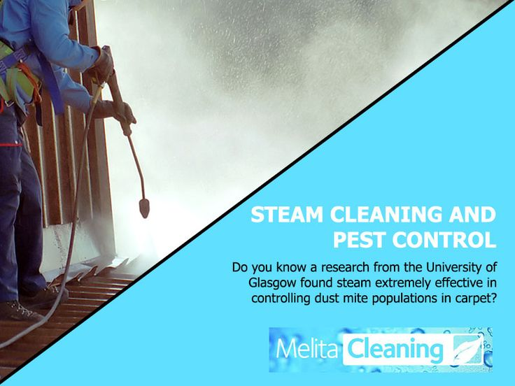 Steam Cleaning and Pest Control - Do you know a research from the University of Glasgow found steam extremely effective in controlling dust mite populations in carpet?
