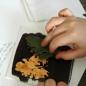 arteascuola: Leaves printed with bleach - paint board with black india ink, put bleach on leaves..