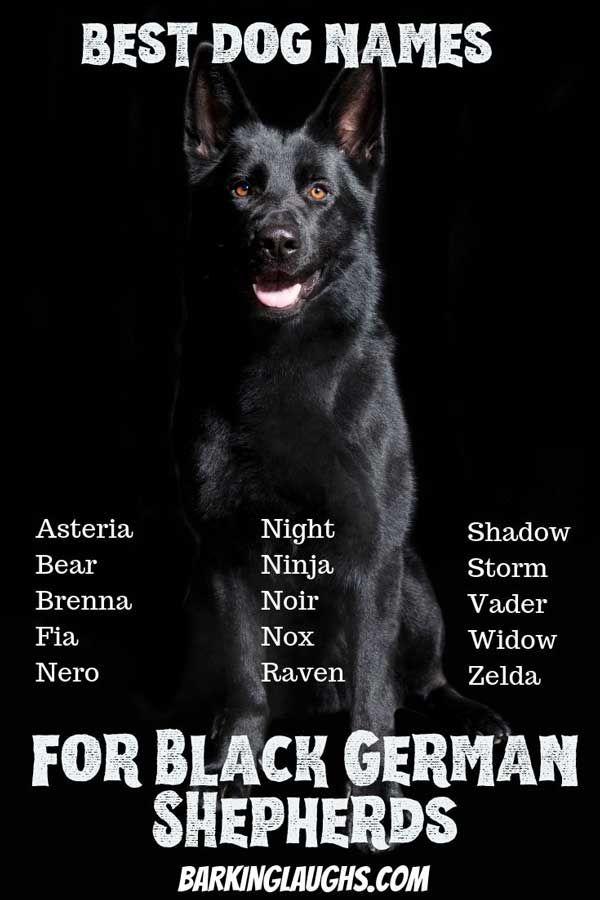 The Best Dog Names For German Shepherds Best Dog Names Dog