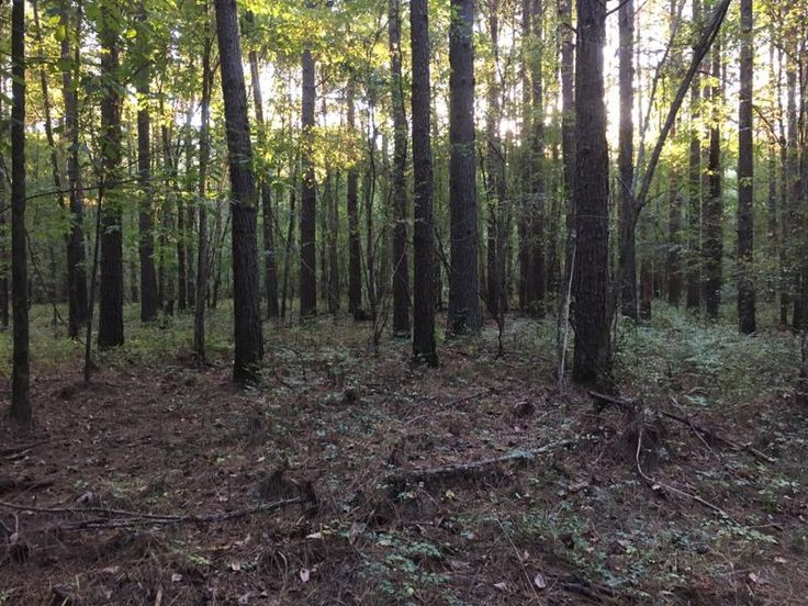 423 Acres in Rankin County for Sale