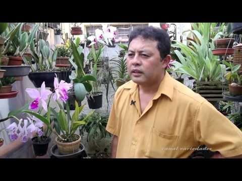 Orquídea em casa, Silvio da dicas de onde cultivar - YouTube