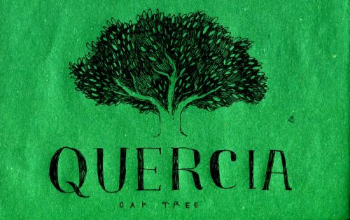 Learning Italian Language ~ Quercia (oak tree) IFHN