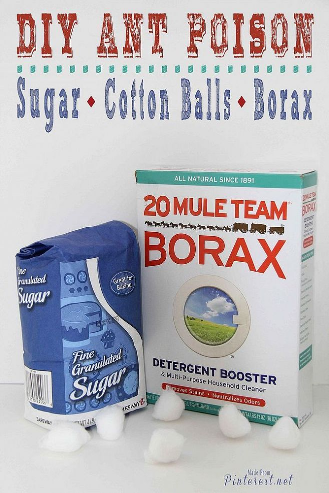 25 best ideas about borax for ants on pinterest killing sugar ants homemade ant killer and. Black Bedroom Furniture Sets. Home Design Ideas