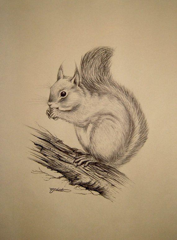 Vintage Ink Sketch Zeichnung eines Eichhörnchens von QueensParkVintage, 40,00 $
