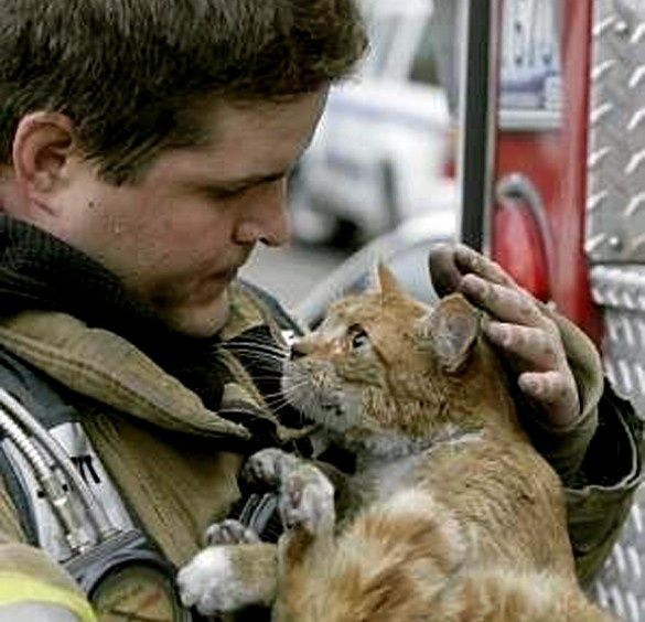 threads single uniform firemen rescuing cats