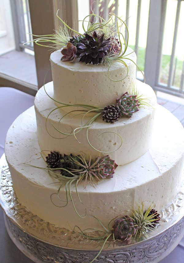 Idea for wedding cake- air ferns and succulants- from Flora grubb