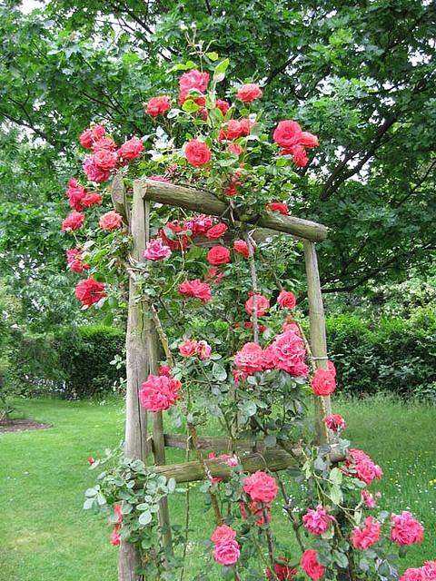 Rose trellis in the Regent's Park, London