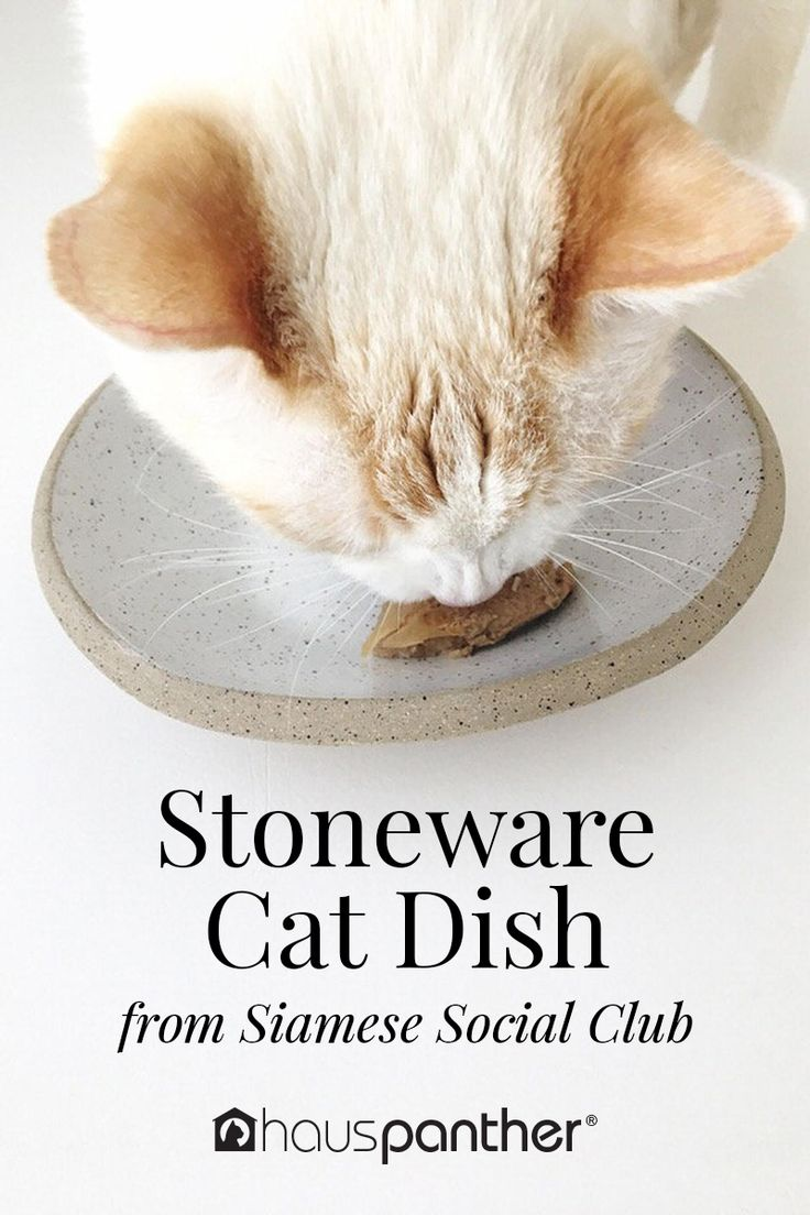 Handmade Stoneware Cat Dish Perfect for Cats with